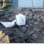 DIY Self Filling Duck Waterer