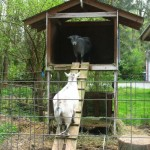 DIY Two Storey Goat House
