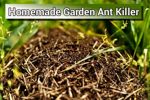 Homemade Natural Garden Ant Killer