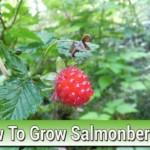 How To Grow Salmonberries