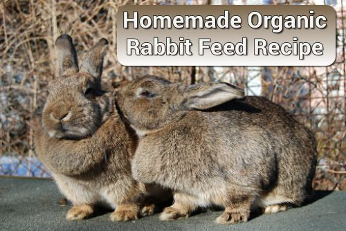 Homemade Organic Rabbit Feed Recipe