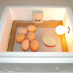 DIY Simple Chicken Egg Incubator Plans