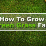 How To Grow Green Grass Fast