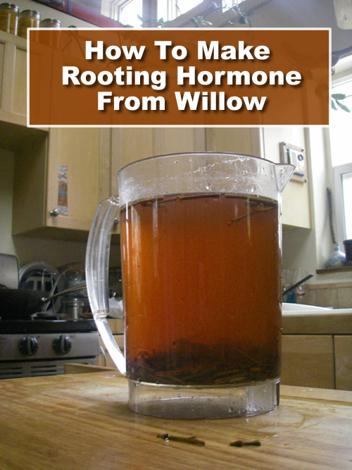 How To Make Rooting Hormone From Willow