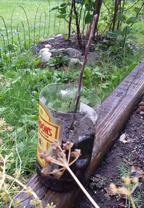 How To Grow Trees From Cuttings