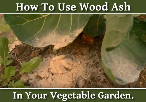 Using Wood Ash In Your Vegetable Garden