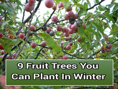 9 Fruit Trees You Can Plant In Winter