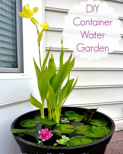 DIY Container Water Garden