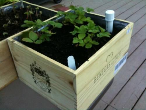 DIY Wine Box Garden Beds