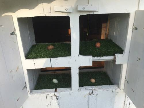 DIY   Astro Turf Nesting Box