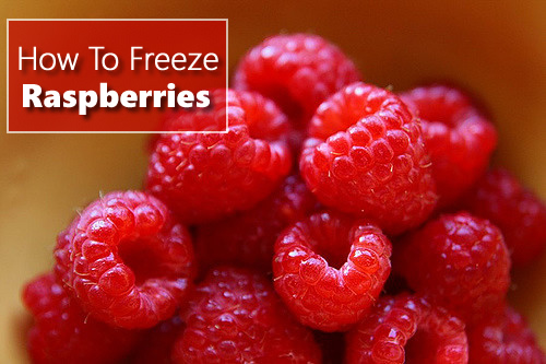 how to freeze fresh picked blackberries