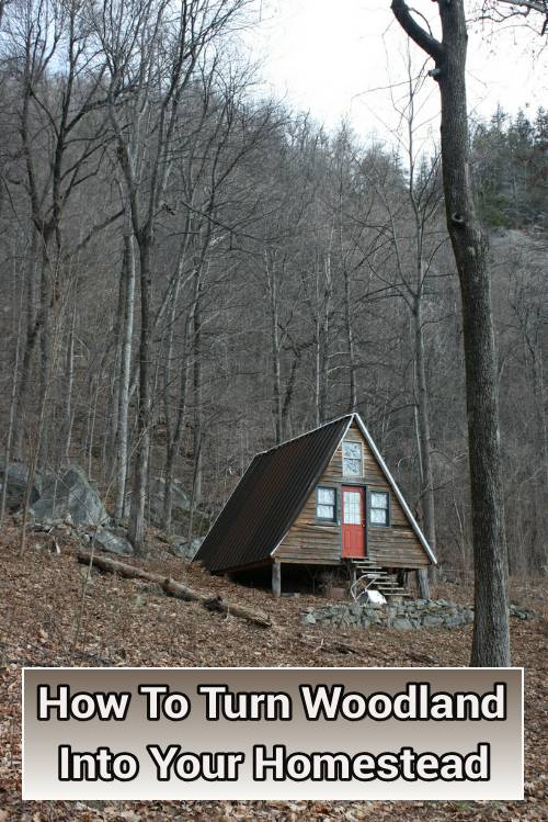 How To Turn Wooded Land Into Your Homestead