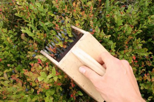 DIY homemade berry picker
