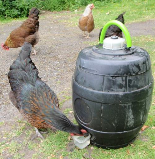 Homemade Barrel Chicken Waterer