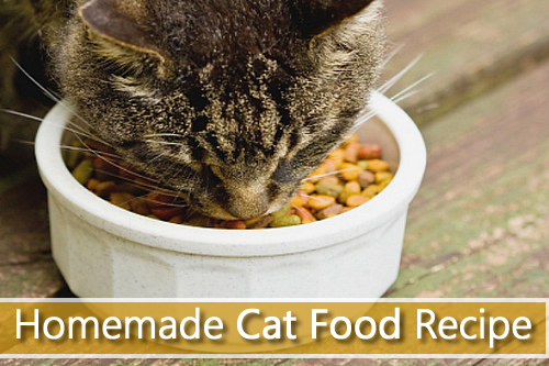How To Make Your Own Cat Food