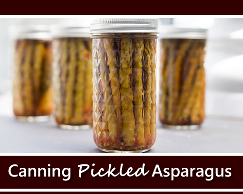 Canning Pickeled Asparagus