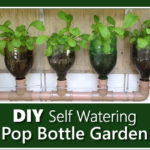DIY Self Watering Pop Bottle Garden
