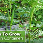 How To Grow Okra In Containers