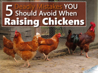 5 Deadly Chicken Mistakes You Should Avoid