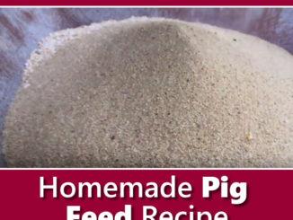 Homemade Pig Feed Recipe
