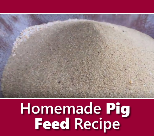 Homemade Pig Feed Recipe