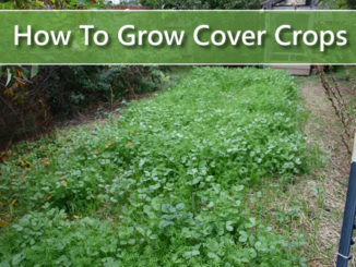 How To Grow Cover Crops