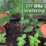 DIY Olla Self Watering Pots