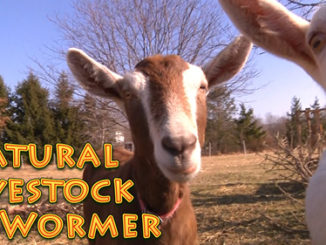 Homemade Natural Livestock Dewormer