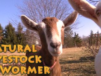 Homemade Natural Livestock Dewormer