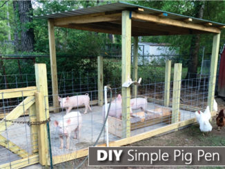 How To Build A Pig Pen