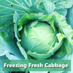 How To Freeze Fresh Cabbage Heads