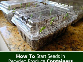 How To Start Seeds in Produce Containers