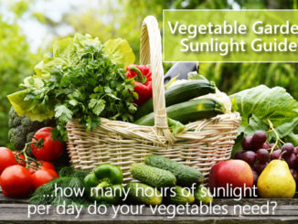 Vegetable Garden Sunlight Chart