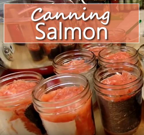 Canning Salmon
