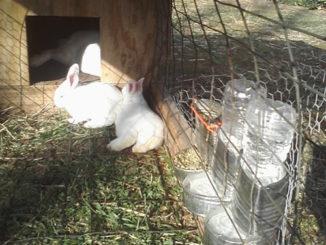 DIY Tin Can Rabbit Feeders