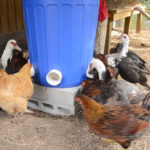 DIY Garbage Can Chicken Feeder