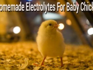 Homemade Electrolyte Recipe For Chicks