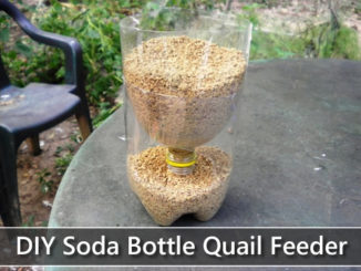 DIY 2L Soda Bottle Quail Feeder