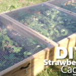 DIY Strawberry Cage