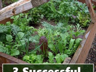 Cold Frame Gardening Tips