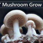DIY Mushroom Grow Kits
