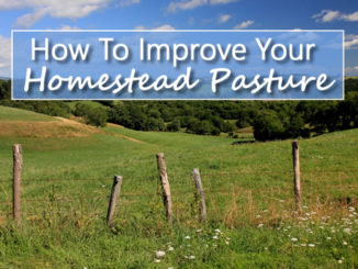 How To Improve Your Homestead Pasture