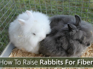 How To Raise Rabbits For Fiber