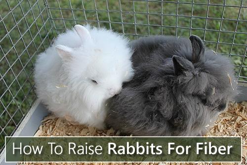 How To Raise Rabbits For Fiber