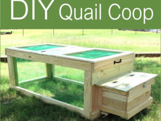 DIY Quail Coop Plans