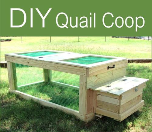 Diy Quail Coop