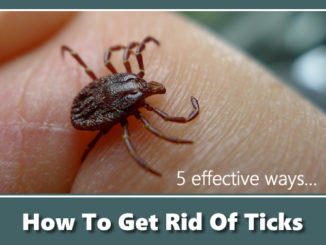 How To Get Rid Of Ticks