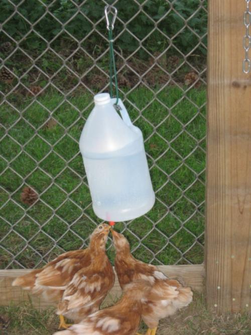 Diy Vinegar Bottle Chicken Waterer