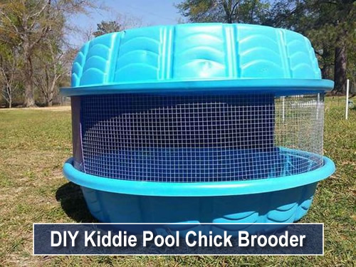 DIY Kiddie Pool Chick Brooder