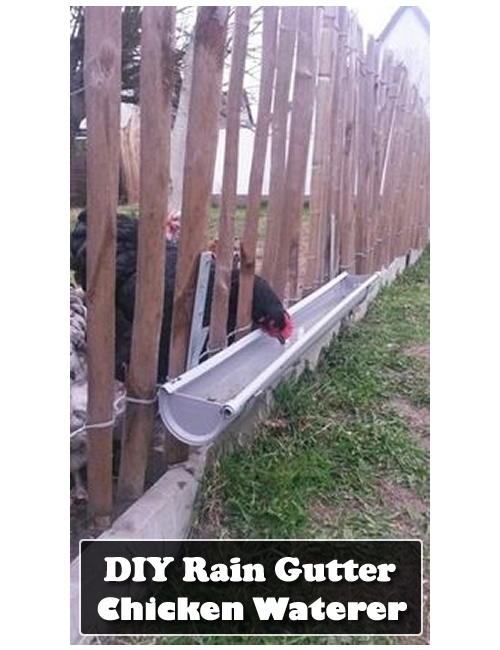 Diy Rain Gutter Chicken Waterer